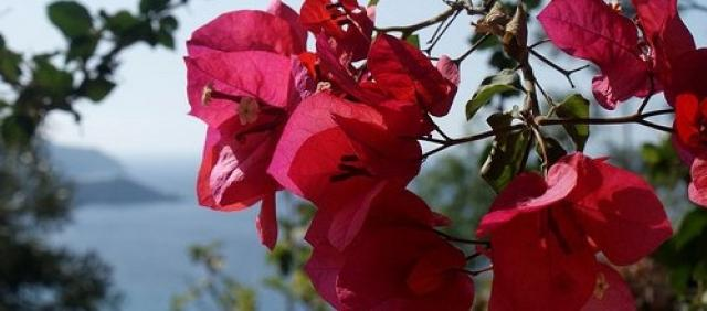 Red Flowers in Front Of Sardinian Sea