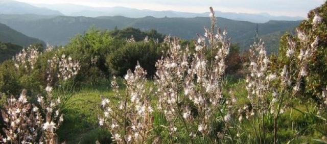Sardinia Landscape Spring