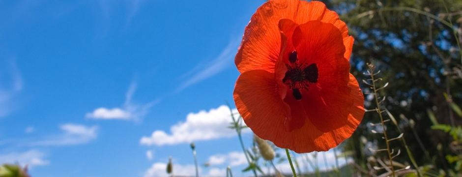 Red Flower in Sardinia