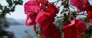 Weddings Sardinia - Exclusive Venues & Offers